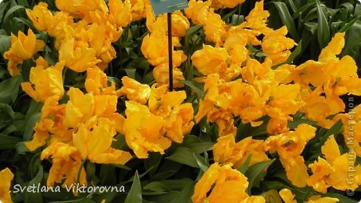 сказочный мир цветов фото 13