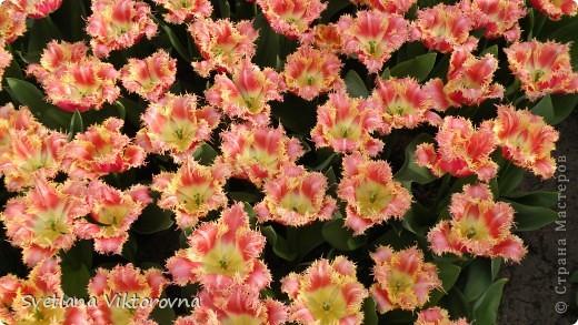 сказочный мир цветов фото 14