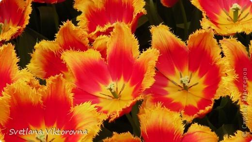 сказочный мир цветов фото 15