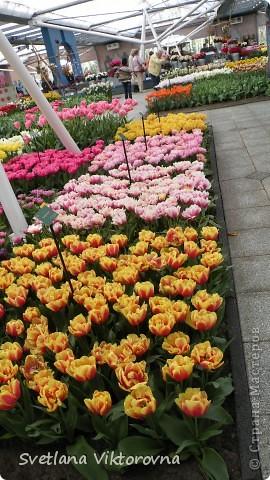сказочный мир цветов фото 16