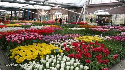 сказочный мир цветов фото 17