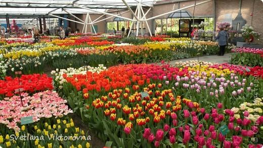 сказочный мир цветов фото 27