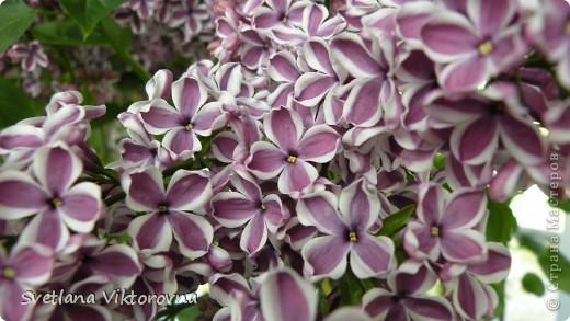 сказочный мир цветов фото 31