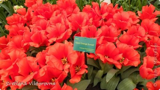 сказочный мир цветов фото 30