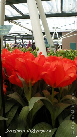 сказочный мир цветов фото 29