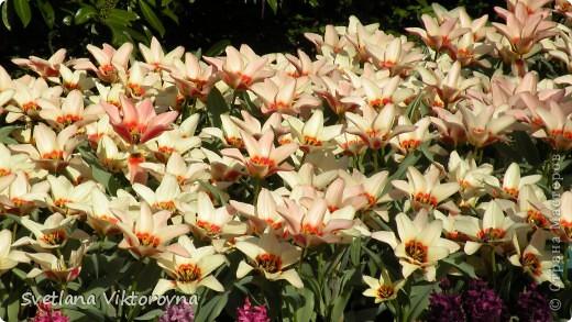 сказочный мир цветов фото 37