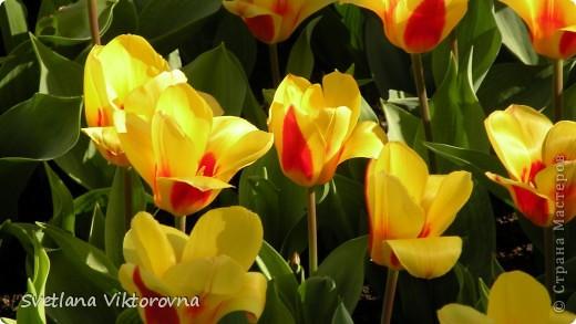 сказочный мир цветов фото 39