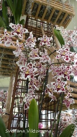 сказочный мир цветов фото 52