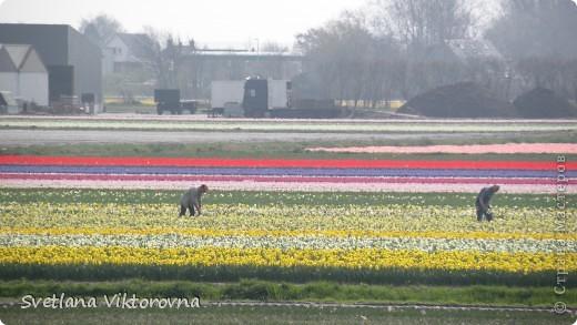 сказочный мир цветов фото 72