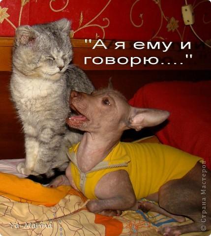 МЫ ОЧЕНЬ ЛЮБИМ НАШИХ ПИТОМЦЕВ. Я НЕ БУДУ ЗДЕСЬ КОММЕНТИРОВАТЬ ФОТОГРАФИИ. ОНИ ГОВОРЯТ САМИ ЗА СЕБЯ))) фото 3