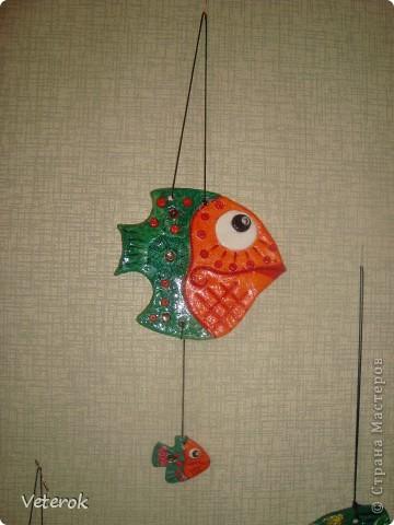 Мои рыбки фото 3