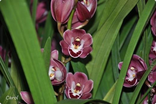 Орхидеи фото 39