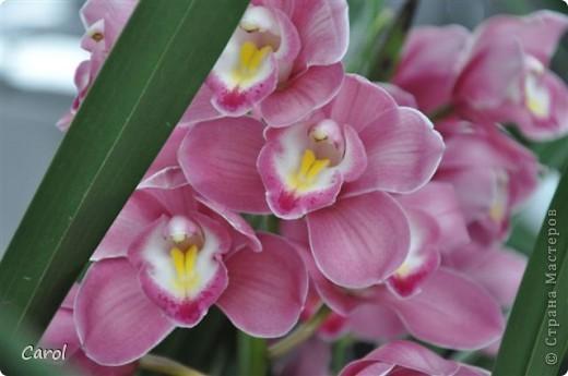 Орхидеи фото 38