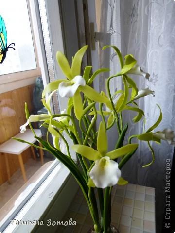 Орхидея - ваниль. Сделана композиция из глины модерн. Пять веток: три с цветами и две с бутончиками.  фото 5