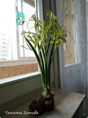 Орхидея - ваниль. Сделана композиция из глины модерн. Пять веток: три с цветами и две с бутончиками.  фото 3