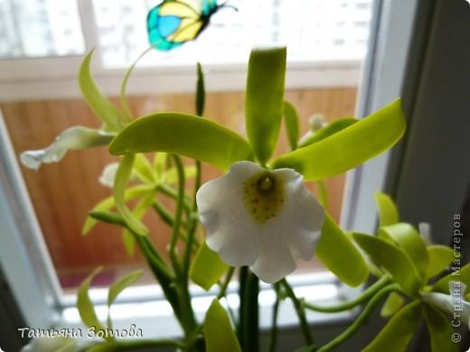 Орхидея - ваниль. Сделана композиция из глины модерн. Пять веток: три с цветами и две с бутончиками.  фото 1