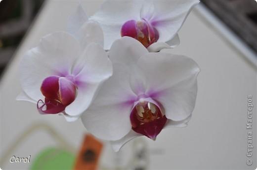 Орхидеи фото 1