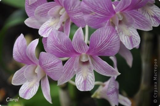 Орхидеи фото 11