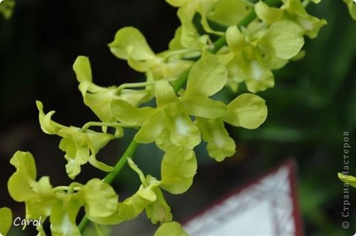 Орхидеи фото 15