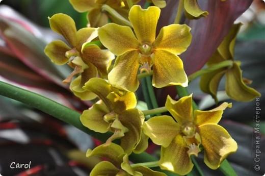 Орхидеи фото 19