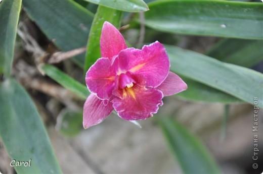 Орхидеи фото 24