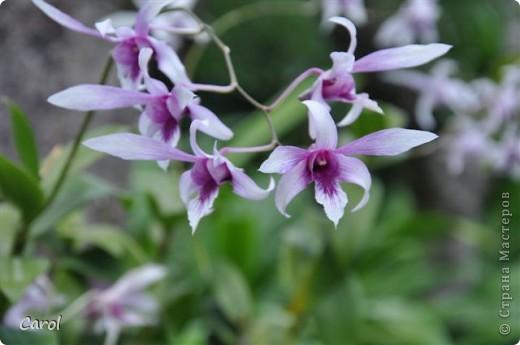 Орхидеи фото 26