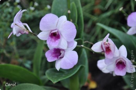 Орхидеи фото 27
