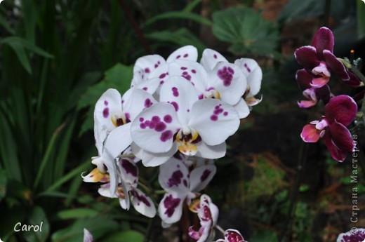 Орхидеи фото 34