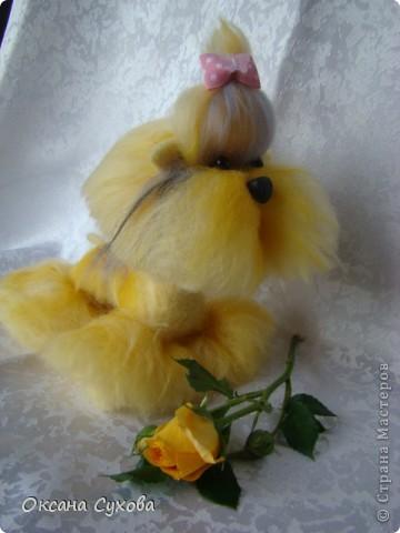 Вот такого очаровашку на День рождение я получила от своей 14 летней дочери Анастасии. фото 4