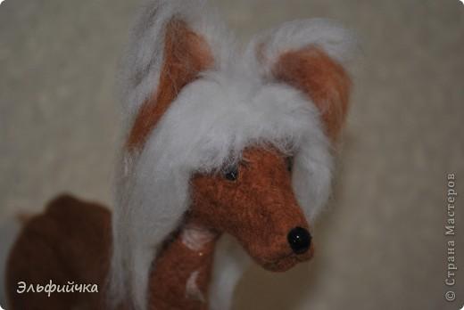 Когда я впервые увидела эту собаку, я была в изумлении от неё. Глаз не могла оторвать. Настолько грациозно она шла, а её белоснежная грива была похожа на фату невесты. Я влюбилась в эту породу. фото 3