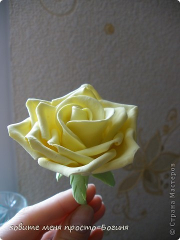 Мои первые розы! Не судите строго. фото 2