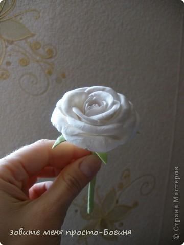 Мои первые розы! Не судите строго. фото 3