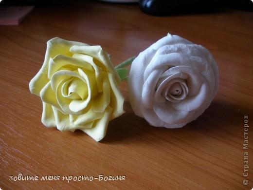 Мои первые розы! Не судите строго. фото 1