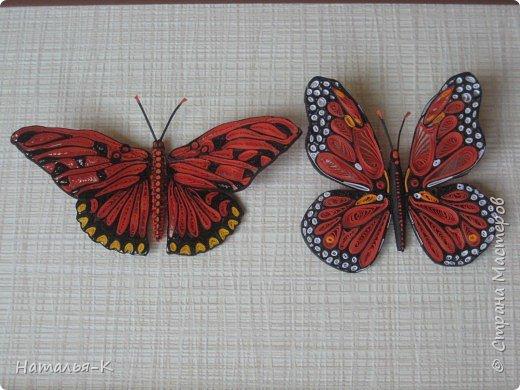 Моя вторая бабочка в технике квиллинг. Ещё ничего не приклеено, просто наброски.  Захотелось скорее похвастать, думаю многим  знакомо это чувство. фото 6