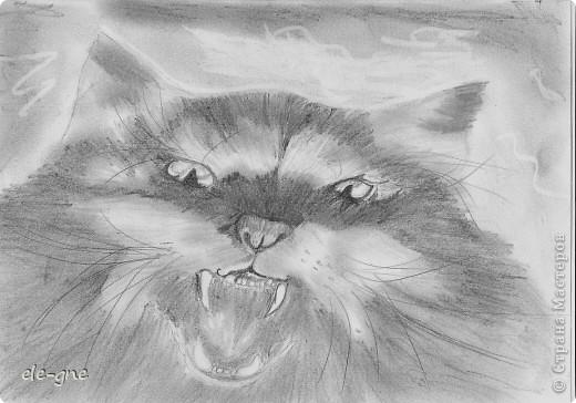 Вот такой грозный кот ! Источник с интернета.