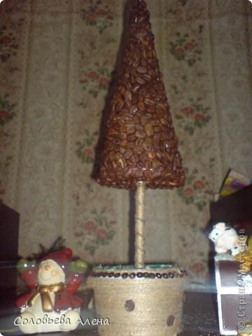 Мои кофейные деревья. фото 3