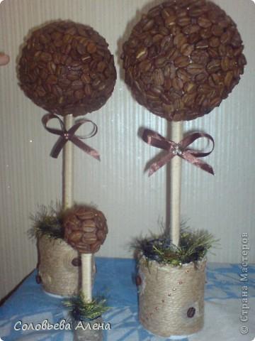 Мои кофейные деревья. фото 4