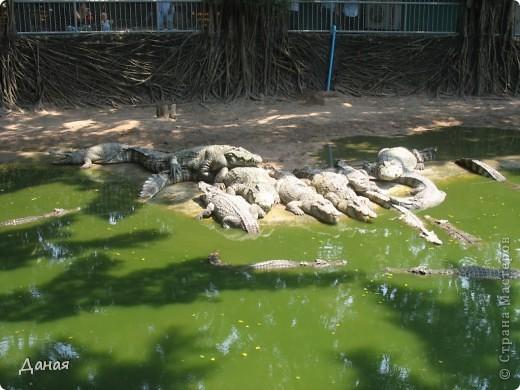 """""""Договорились я и мама, дождаться выходного и посмотреть""""... Нет, сегодня мы пойдем смотреть не гиппопотама, а крокодилов.  фото 2"""