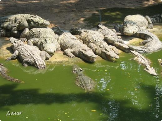 """""""Договорились я и мама, дождаться выходного и посмотреть""""... Нет, сегодня мы пойдем смотреть не гиппопотама, а крокодилов.  фото 3"""