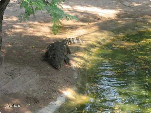 """""""Договорились я и мама, дождаться выходного и посмотреть""""... Нет, сегодня мы пойдем смотреть не гиппопотама, а крокодилов.  фото 4"""