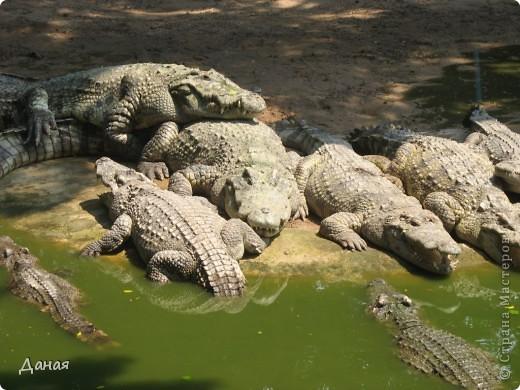 """""""Договорились я и мама, дождаться выходного и посмотреть""""... Нет, сегодня мы пойдем смотреть не гиппопотама, а крокодилов.  фото 5"""