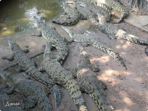 """""""Договорились я и мама, дождаться выходного и посмотреть""""... Нет, сегодня мы пойдем смотреть не гиппопотама, а крокодилов.  фото 6"""