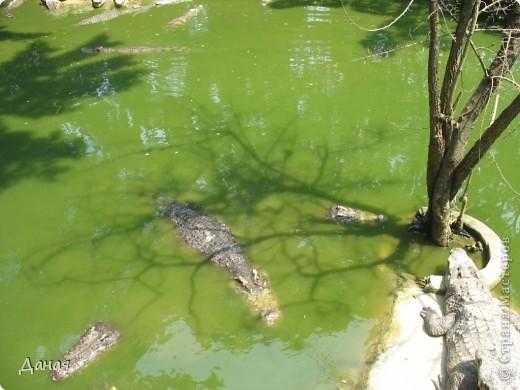 """""""Договорились я и мама, дождаться выходного и посмотреть""""... Нет, сегодня мы пойдем смотреть не гиппопотама, а крокодилов.  фото 7"""