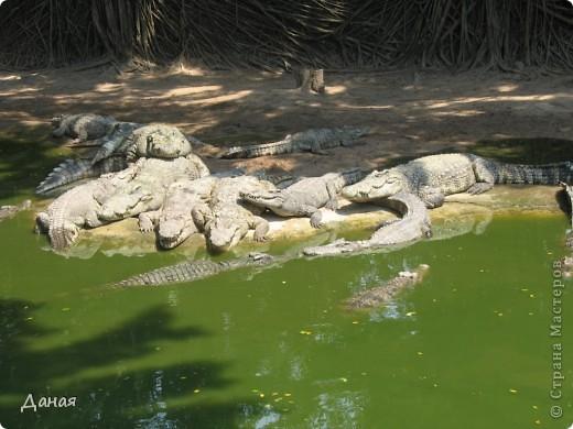 """""""Договорились я и мама, дождаться выходного и посмотреть""""... Нет, сегодня мы пойдем смотреть не гиппопотама, а крокодилов.  фото 8"""