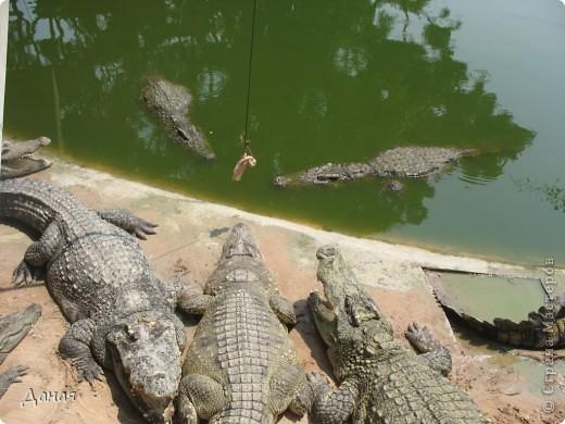 """""""Договорились я и мама, дождаться выходного и посмотреть""""... Нет, сегодня мы пойдем смотреть не гиппопотама, а крокодилов.  фото 9"""