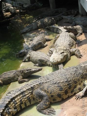 """""""Договорились я и мама, дождаться выходного и посмотреть""""... Нет, сегодня мы пойдем смотреть не гиппопотама, а крокодилов.  фото 11"""