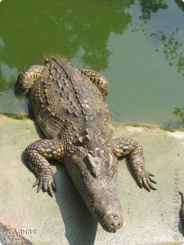 """""""Договорились я и мама, дождаться выходного и посмотреть""""... Нет, сегодня мы пойдем смотреть не гиппопотама, а крокодилов.  фото 12"""