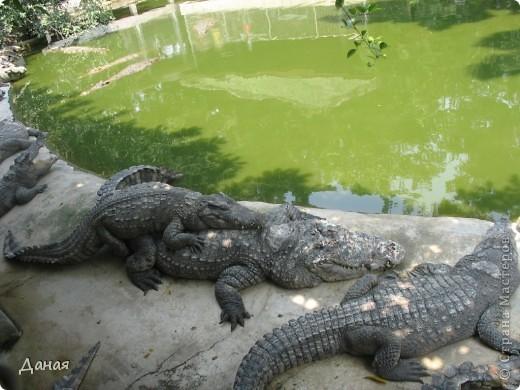 """""""Договорились я и мама, дождаться выходного и посмотреть""""... Нет, сегодня мы пойдем смотреть не гиппопотама, а крокодилов.  фото 13"""