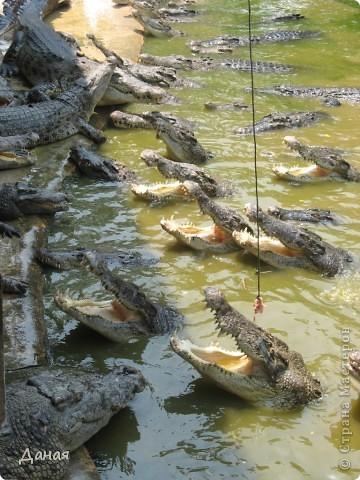 """""""Договорились я и мама, дождаться выходного и посмотреть""""... Нет, сегодня мы пойдем смотреть не гиппопотама, а крокодилов.  фото 15"""