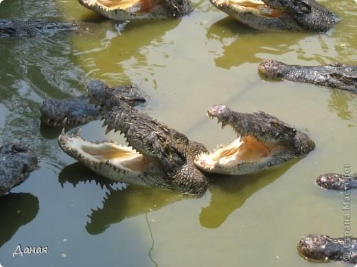 """""""Договорились я и мама, дождаться выходного и посмотреть""""... Нет, сегодня мы пойдем смотреть не гиппопотама, а крокодилов.  фото 16"""
